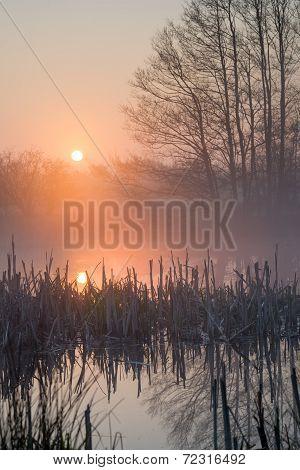 Sunrise Pond And Broken Rush