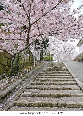 Cherry blossoms on stairs