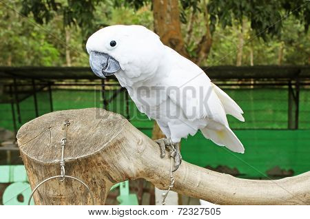 Beautiful White Parrot Ara