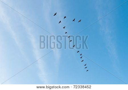 Cranes Flying In A V Formation