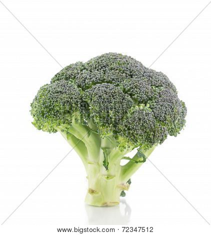 Beautiful ripe broccoli.
