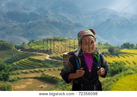 Unidentified Old Hmong woman with rice field terrace background