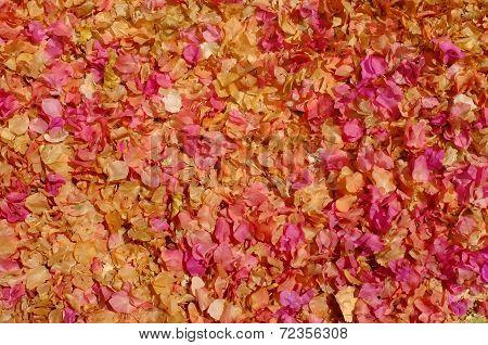 Sun dried fallen flower