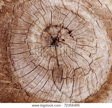 Abstract Of Tree Stump Cutting Surface Use For Texture ,background ,backdrop Of Natural Copy Space