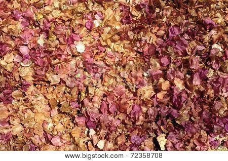 Sun dried fallen flowers