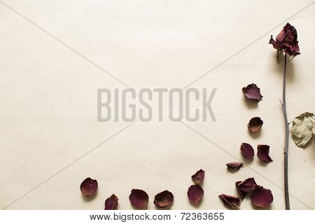 Dried Roses On Brown Background
