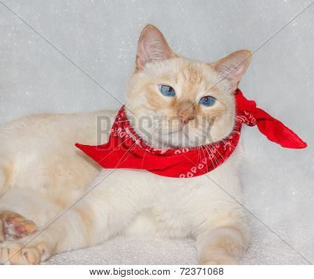 Cat In A Bandana