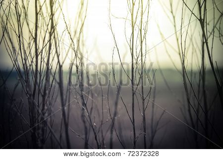 Abstract Nature Background With Wild Flowers And Plants Silhouettes At Foggy Mysterious Sunrise. Ear