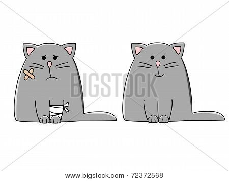 Vet Cat