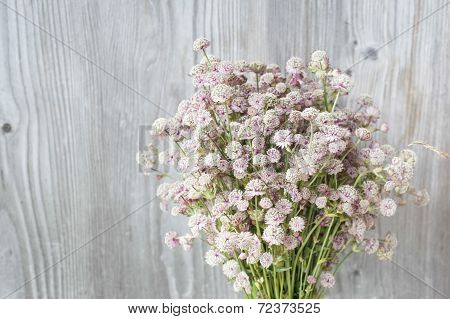Beautiful Tender Bouquet Of Summer Meadow Flowers