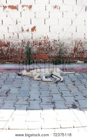 Sleeping street dog