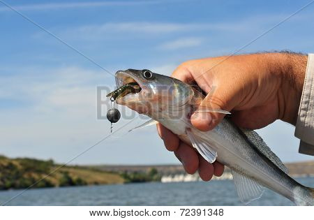 Fishing Bait In The Fish's Mouth