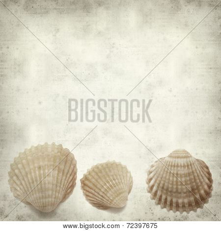 Textured Old Paper Background With Shells
