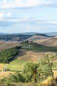 picture of senesi  - Crete senesi characteristic landscape in Val d