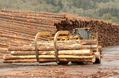 picture of wheel loader  - large wheeled front end log loader working the log yard at a lumber processing mill that specializes in small logs - JPG