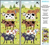 foto of cow  - Farm themed picture puzzle - JPG