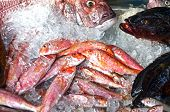 picture of mullet  - Red mullet and some other fish on the market - JPG