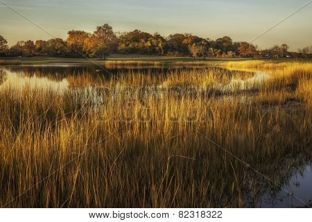 Grassy Golden Field By Pond At Sunset