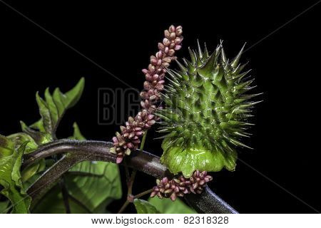 Defensive Spiky Green Plant