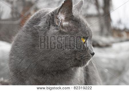 Gray Mature Cat Outdoors