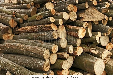 Pile Of Hornbeam Chopped Logs
