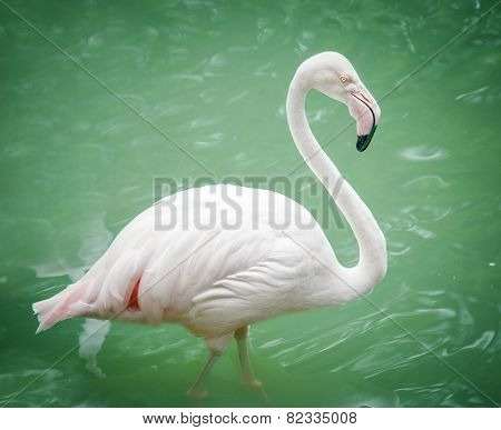 Portrait of a flamingo in lake