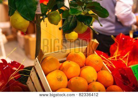 Sicilian Oranges And Lemon Tree