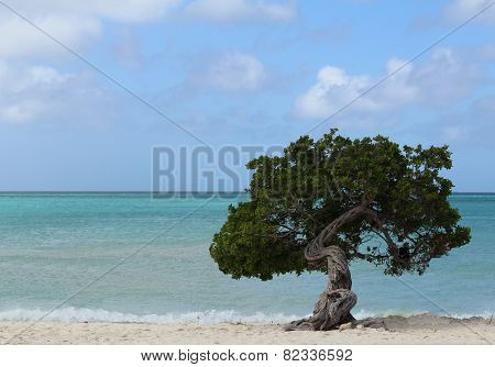 The Lone Beach Tree