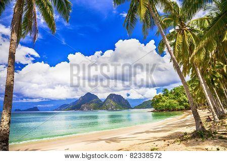 idilyc tropics