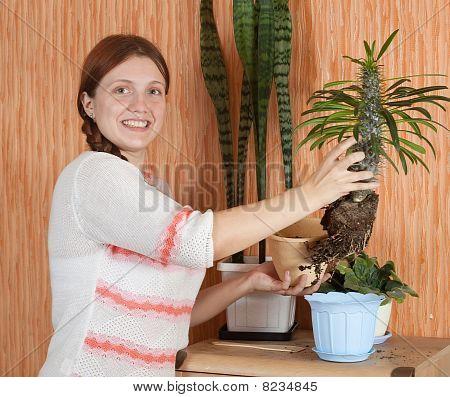Woman Replanting Pachypodium Cactus