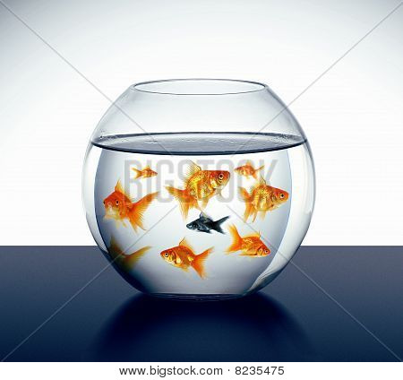 Goldfish Swim