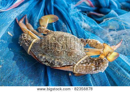 Crab Or Blue Crab, Blue Manna Crab, Sand Crab.