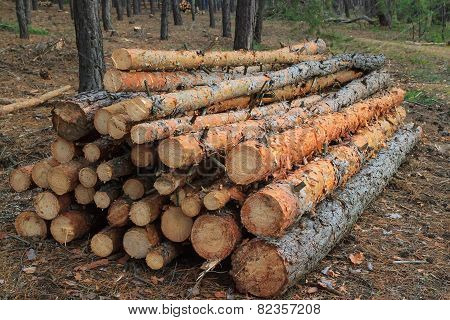 Freshly Cut Tree Logs Piled Up