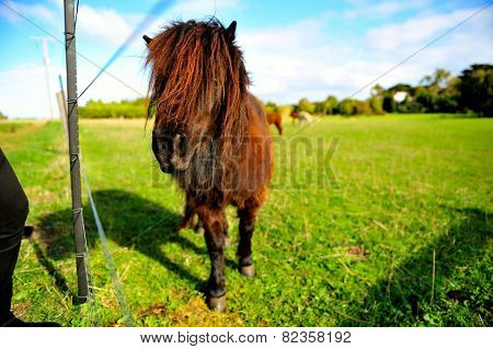 a little handsome pony
