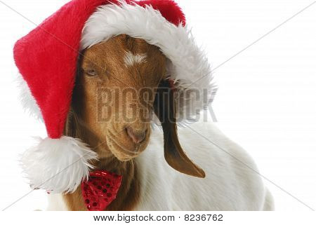 Goat Dressed Up With Santa Hat