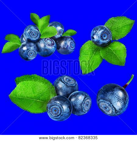 blueberry collection set closeup macro isolated on blue color background
