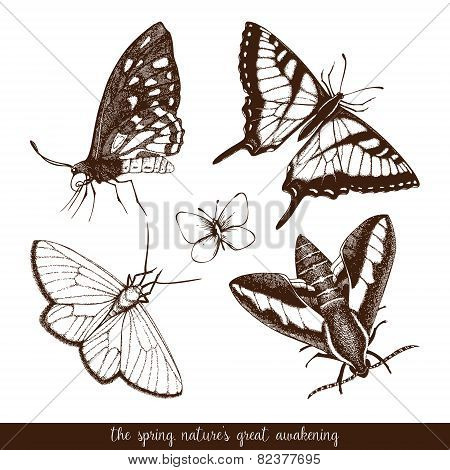 Realistic vector butterfly sketch