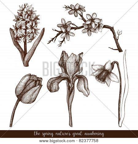 Vector flowers sketch set.