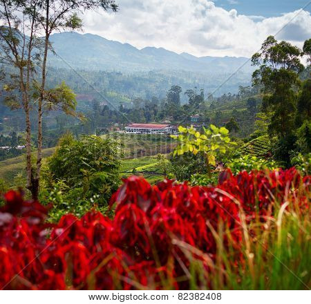 Valley in mountains with tea plantations and flowers. Sri Lanka