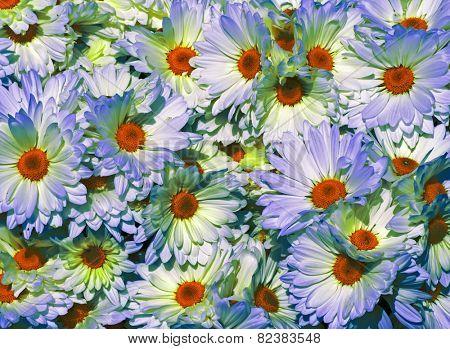 fansatia flowers