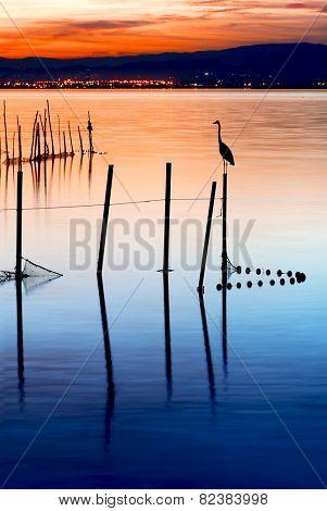 bird on the lake