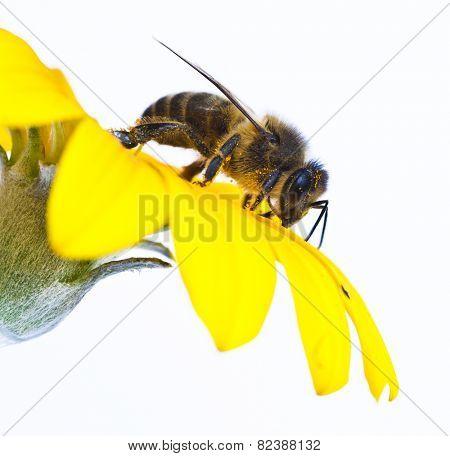 taking bee pollen