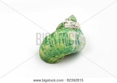 Green Sea Shells On White Background