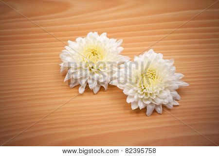 Two White Chrysanthemum Flower On Wooden Background