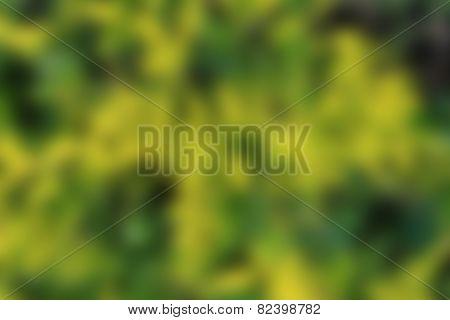Blur Green Leaf Background