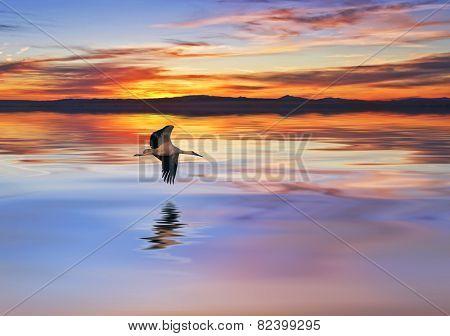 I cross the Heron Lake