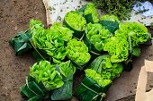 image of flea  - These green salad at the flea market