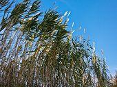 stock photo of prairie  - Green prairie grass against blue sky at late autumn in Istria - JPG