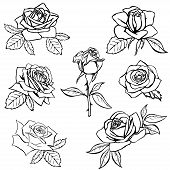 stock photo of single white rose  - Set Rose sketch - JPG