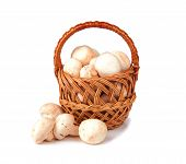 picture of champignons  - mushrooms champignon in a wicker basket isolated on white background - JPG